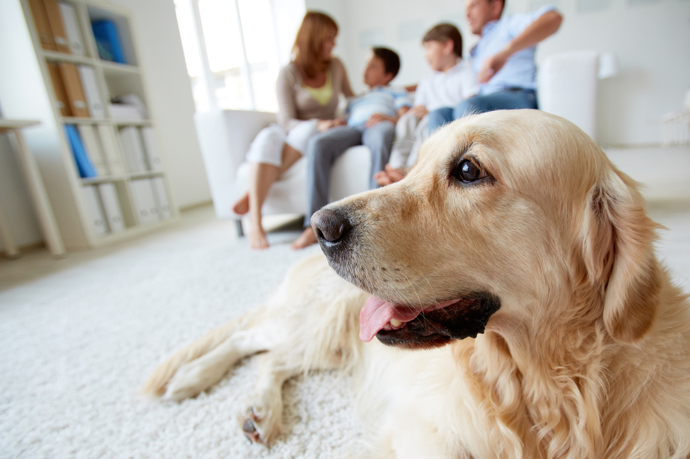 Custody for Family Pets – New Laws for 2019